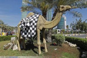 Bahrain Camel